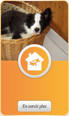 garde de chiens chats rongeurs et nouveaux animaux de companie sur strasbourg et environs. Black Bedroom Furniture Sets. Home Design Ideas